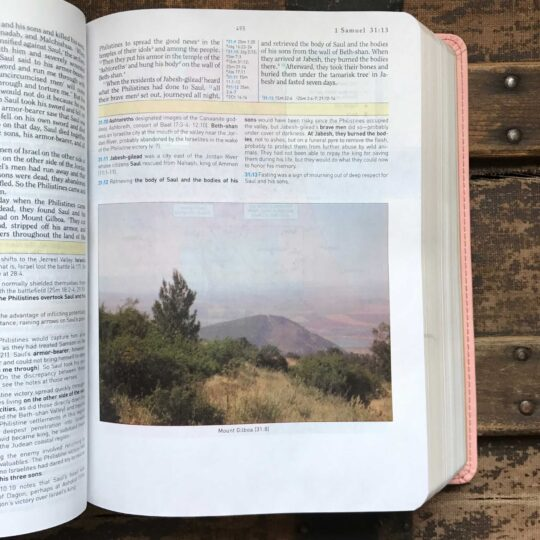 HCSB Study Bible, Blush/Brown LeatherTouch